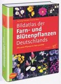 Bildatlas der Farn- und Blütenpflanzen Deutschlands.