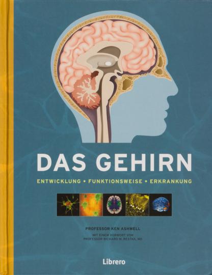 Das Gehirn. Das Gehirn und die psychische Gesundheit.
