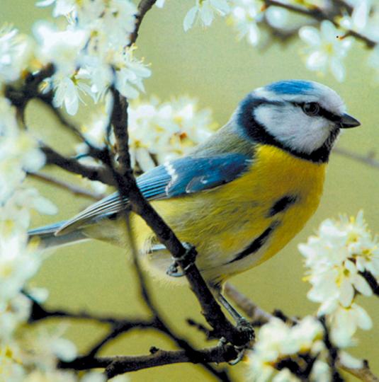 Die Vogelwelt in Gärten und Parks DVD
