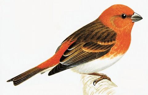 Enzyklopädie der europäischen Vogelwelt