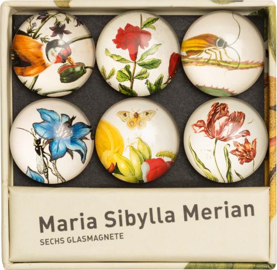Glasmagnete »Maria Sibylla Merian«.