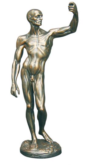 Houdons Anatomische Studie.