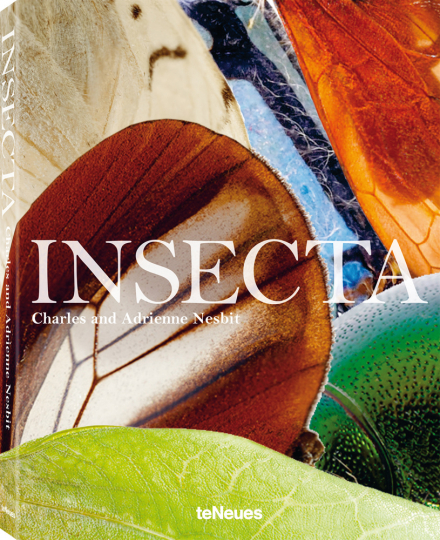Insecta. Insekten, wie Sie sie noch noch nie gesehen haben.
