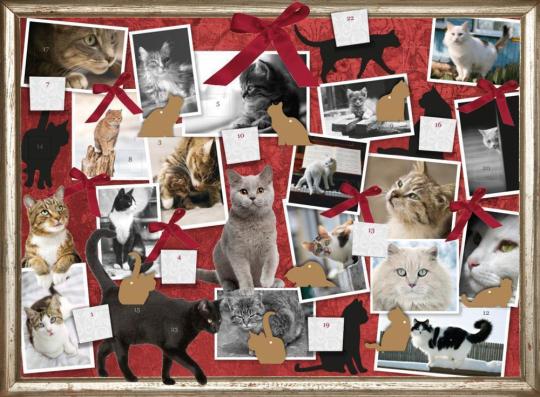 Katzen. Freunde auf Samtpfoten. Adventskalender.