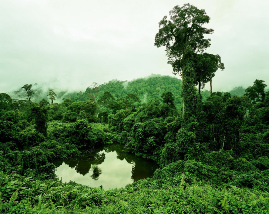 Olaf Otto Becker. Primary Forest 02, Lake, Malaysia 10/2012, Altitude 240 m.