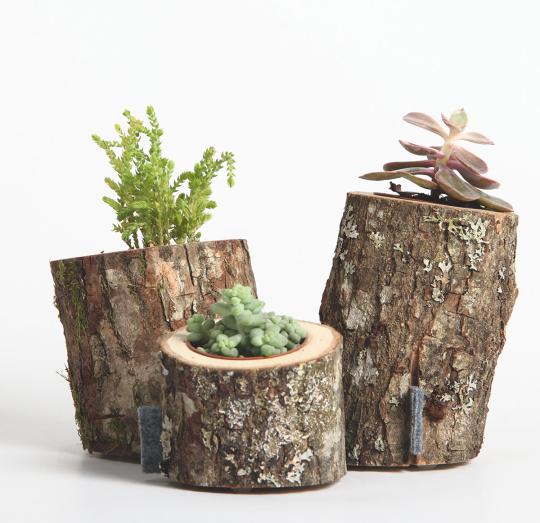 Vasen aus Baumstämmen.