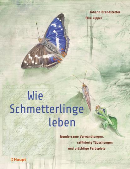 Wie Schmetterlinge leben. Wundersame Verwandlungen, raffinierte Täuschungen und prächtige Farbspiele.