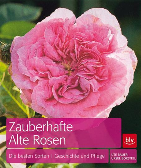 Zauberhafte Alte Rosen. Die besten Sorten, Geschichte und Pflege.