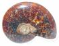 Ammonit - beidseitig poliert, 5-6 cm Bild 1