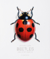 Beetles and Other Insects. Käfer und andere Kerbtiere. Bild 1