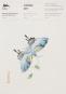 Briefpapierblock »Chinesische Kunst«. Bild 1