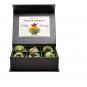 Erblüh-Tee-Blumen Grün. 6er-Set. Magnetbox mit Silberprägung. Bild 1