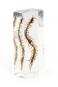 Hundertfüßer in Acrylblock gegossen. »Scolopendra subspinipes«. Bild 1