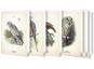 Kunstklappkarten mit Vögeln. Bild 1