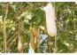 Samen »Leberwurstbaum«. Bild 1