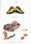 Maria Sibylla Merian. Schmetterlinge, Käfer und andere Insekten. Leningrader Studienbuch. Bild 1