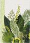 Notizbuch Botanicals. A5 liniert. Bild 1