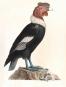 Alexander von Humboldt. Tierleben. Bild 2