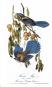 Audubon Birds. Ausgesuchte Druckgrafiken aus »Birds of America«. Bild 2