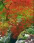 Bäume und Sträucher: Verwandlungskünstler im Garten Bild 2