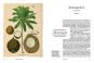 Besondere Bäume und ihre Kräfte. 60 Arten erzählen ihre Geschichte. Bild 2