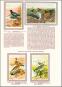 Bunte Vögel aus aller Welt - Limitierte und numerierte Sonderedition auf 300 Exemplare - Nachdruck der Originalausgabe Bild 2