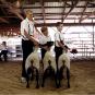 Dan Nelken. Till the Cows Come Home. Vorzugsausgabe 2. Bild 2