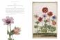 Das Florilegium von Nassau-Idstein. Johann Walters weltberühmtes Blumenbuch. Bild 2