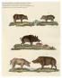 Das Schweinebuch. Von schönen Kühen, seltenen Rassen und dem Wohl der Tiere. Bild 2