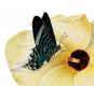 Die geheimnisvolle Sexualität der Pflanzen. Von Blüten und Pollen. Bild 2