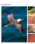 Die Welt der Vögel für Kinder erzählt. Bild 2