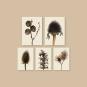 Druck »Echinacea purpurea«. Purpur-Sonnenhut. Bild 2