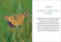 Ein Gartenparadies für Schmetterlinge. Die schönsten Blumen, Stauden, Kräuter und Sträucher für Falter und ihre Raupen. Bild 2