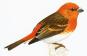 Enzyklopädie der europäischen Vogelwelt Bild 2