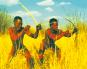 Kalahari, DVD Bild 2