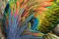 Knallbunt und unsichtbar. Farbenpracht und Tarnung in der Tierwelt. Bild 2
