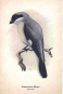 Kunstklappkarten mit Vögeln. Bild 2