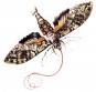 Maria Sibylla Merian. Schmetterlinge, Käfer und andere Insekten. Leningrader Studienbuch. Bild 2