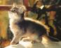 Meine Katze Bild 2