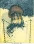 Minuzzi. Werkverzeichnis der Druckgraphik 1968-1977. Vorzugsausgabe mit handsignierter Original-Radierung. Bild 2