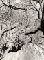 Paul Strand. The Garden at Orgeval. Bild 2