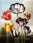 Pflanzen und Kultur. Eine illustrierte Weltgeschichte der Botanik. Bild 2