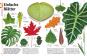 Pflanzen. Bäume, Blumen und Gräser in über 1000 Bildern. Bild 2