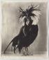 Poultry Suite. Tierporträts. Bild 2