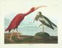 Vögel. Geschichte und Meisterwerke der Vogelillustration. Schätze aus der Bibliothek des Natural History Museum London. Bild 2