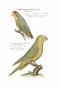 Vorstellung der Vögel Deutschlandes und beyläuffig auch einiger Fremden, nach ihren Eigenschaften beschrieben - Bibliophiler Neudruck der Ausgabe von 1763 bei Friedrich Wilhelm Birnstiel (Berlin) Bild 2