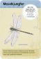 50 heimische Insekten & Spinnen Bild 3