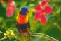 Australien - Land der Farben Bild 3