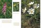 Die Pflanzenwelt der Schwäbischen Alb. Bild 3