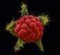 Die unglaubliche Welt der Pflanzen. Bild 3